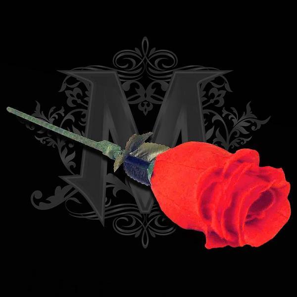 The Rose by Bond Lee & Wenzi Magic